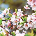 Kevään blogi